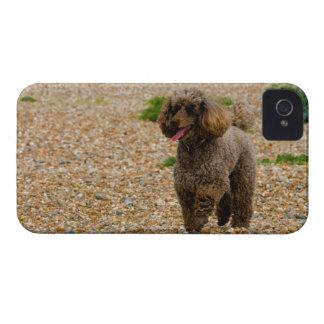 Poodle dog miniature beautiful photo at beach iPhone 4 Case-Mate case