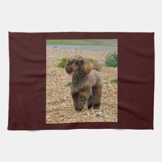 Poodle dog miniature beautiful photo at beach kitchen towel
