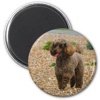 Poodle dog miniature beautiful photo at beach magnet