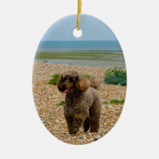 Poodle dog miniature beautiful photo at beach ornament