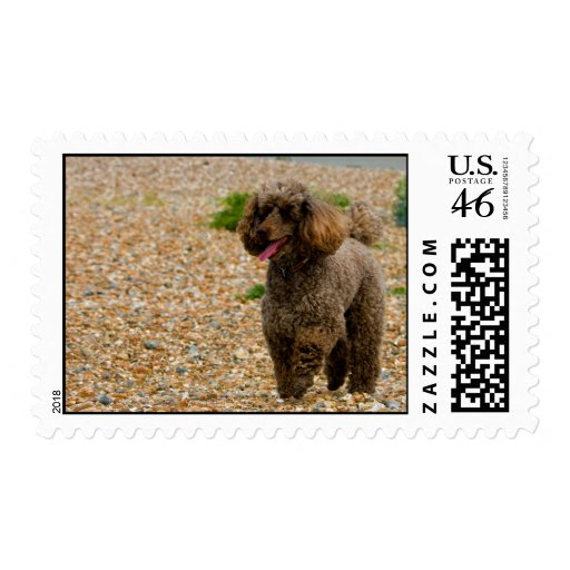 Poodle dog miniature beautiful photo at beach postage stamp
