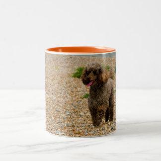 Poodle dog miniature beautiful photo at beach Two-Tone coffee mug