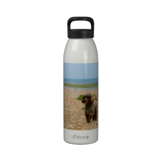 Poodle dog miniature beautiful photo at beach water bottle