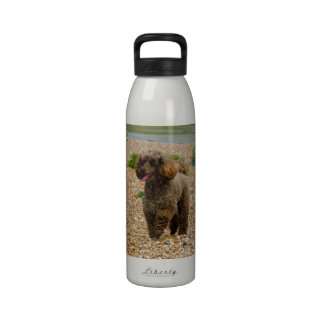 Poodle dog miniature beautiful photo at beach water bottles