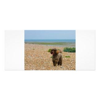 Poodle dog miniature photo custom bookmark rack card
