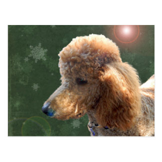 POODLE FOR THE HOLIDAYS POSTCARD