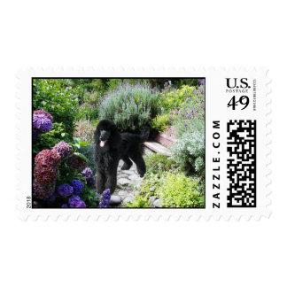 Poodle Garden Postage Stamp