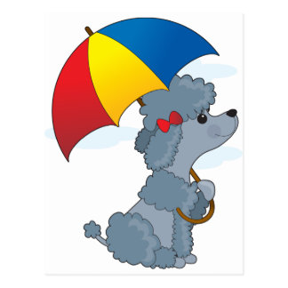 Poodle in Rain Postcard