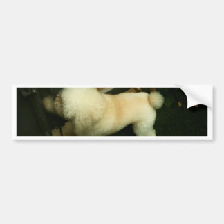 Poodle Knocking at Your Door - Lomo Bumper Sticker