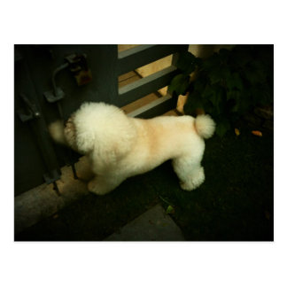 Poodle Knocking at Your Door - Lomo Postcard