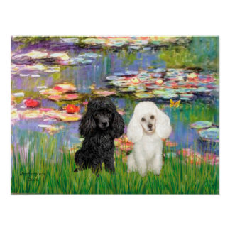 Poodle Pair (Black + White) - Lilies 2 Poster