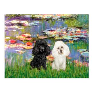 Poodle Pair (BW) - Lilies 2 Postcards