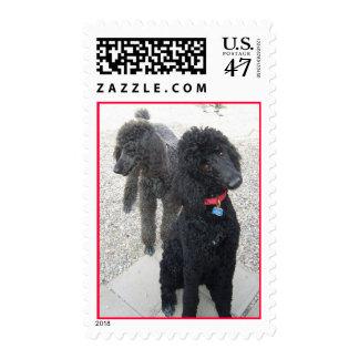 Poodle Postage