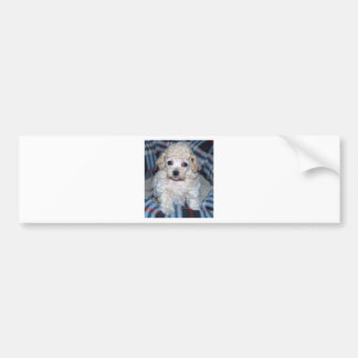 Poodle puppy GOT POO? Bumper Sticker