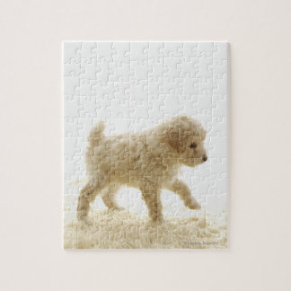 Poodle Puppy Jigsaw Puzzles