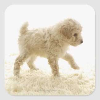 Poodle Puppy Square Stickers