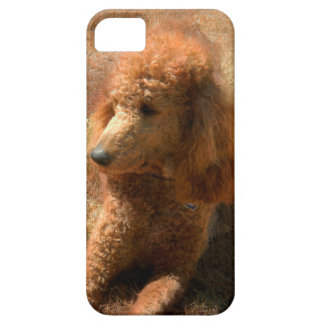 POODLE RELAXES iPhone SE/5/5s CASE