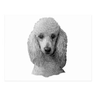 Poodle - Stylized Image - Add Your Own Text Postcard