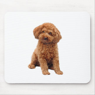 Poodle - Toy (Apricot) Mouse Pad