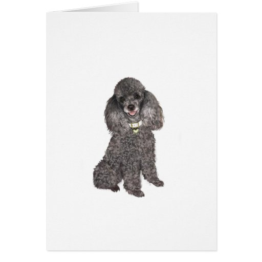 Poodle - Toy /Miniature Silver Card
