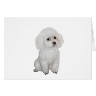 Poodle - white 1 card