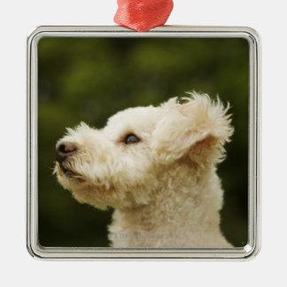 Poodle (white) 2 metal ornament