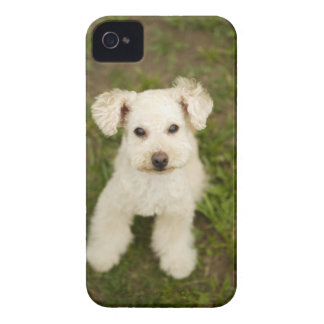 Poodle (white) iPhone 4 Case-Mate case