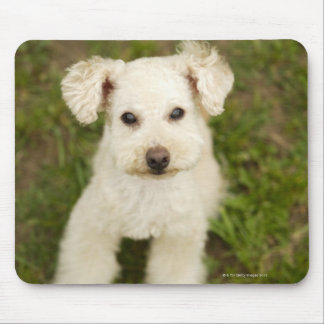 Poodle (white) mouse pad
