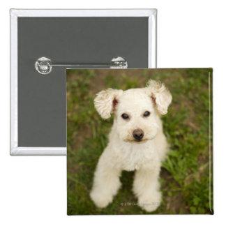 Poodle (white) pinback button