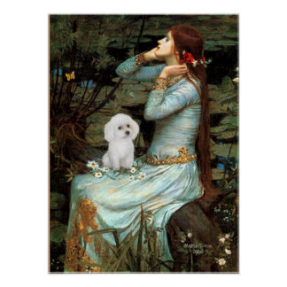 Poodle (White Toy) - Ophelia Seated Poster