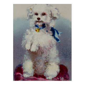 Poodle with blue ribbon postcard