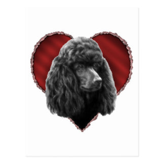 Poodle with Heart Postcard