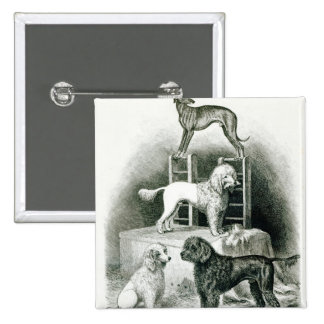 Poodles and Whippet - Group of Mr. Walton's Button