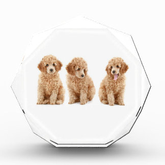 Poodles Acrylic Award