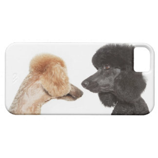 Poodles examining each other iPhone 5 covers