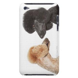 Poodles examining each other Case-Mate iPod touch case