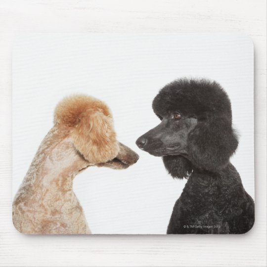 Poodles examining each other mouse pad