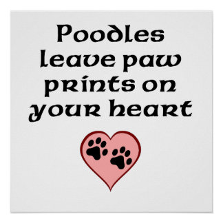 Poodles Leave Paw Prints On Your Heart Poster