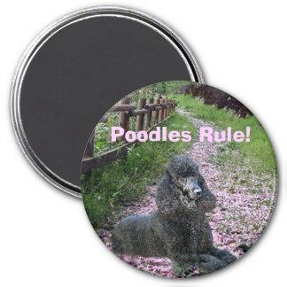 Poodles Rule Black Magnet