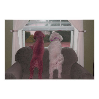 Poodles with a view Poster