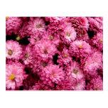 Poofs rosados postal