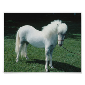 Poofy White Pony Poster