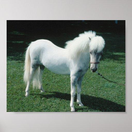 Poofy White Pony Poster