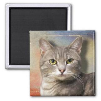 Pookie el gato gris imanes de nevera
