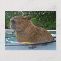 pool_capybara_postcard-p2395006590193626