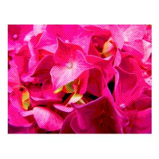 Pop Art Hydrangea Close Up Image Postcard