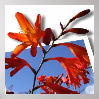 Pop Out Photo Art of vibrant Orange flower Poster