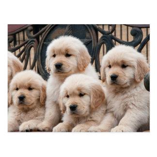 Pop Up! Puppies Postcard