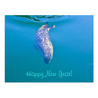 Popeye the Seal Happy New Year Postcards