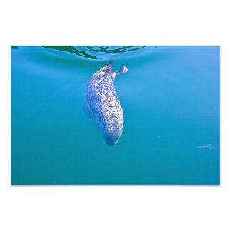 Popeye the Seal Happy New Year Postcards Photo Print